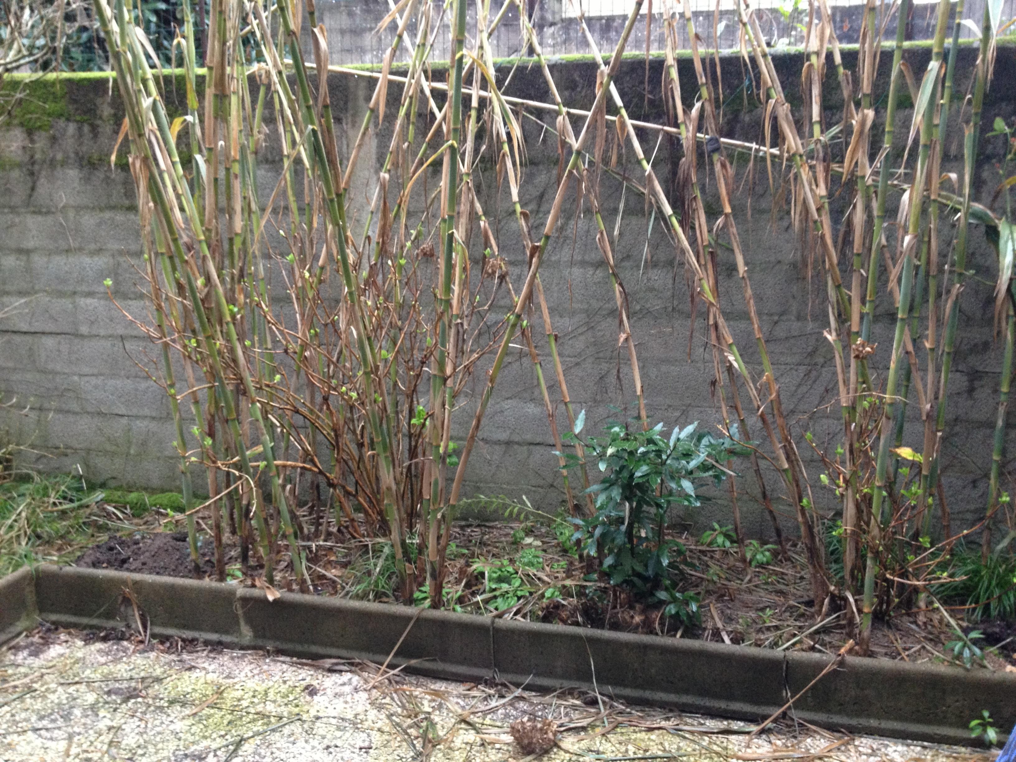 Ar 39 paysage bardage nantes 44 for Entretien jardin orvault