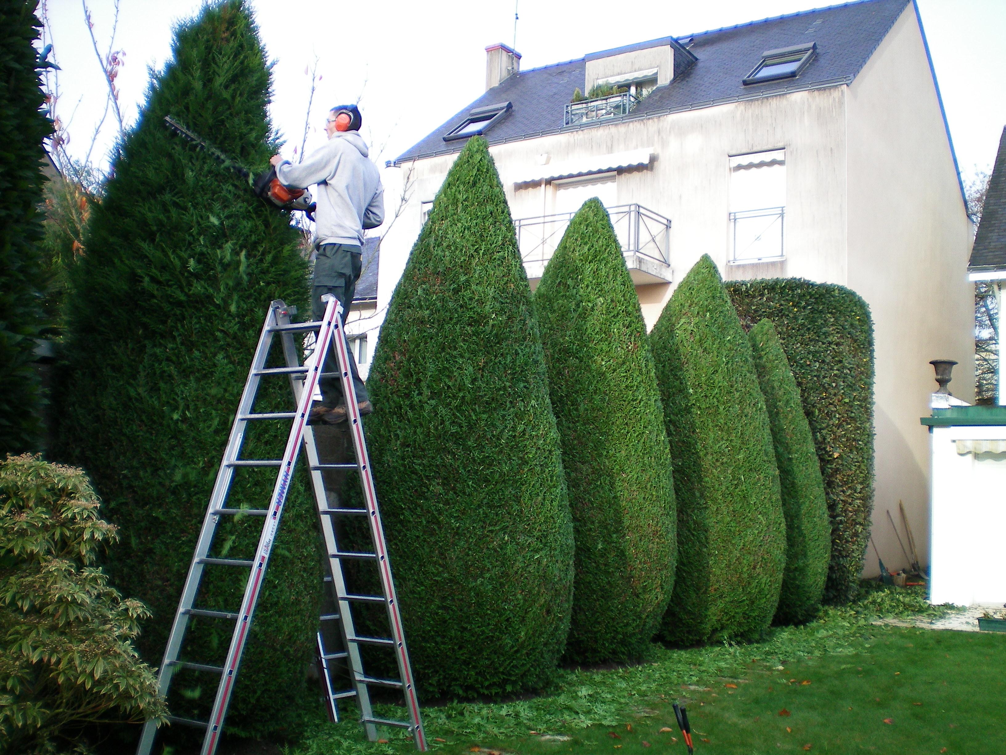Entretien de jardin taille arbre arbuste AR' Paysage Nantes (44)
